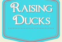 Raising Ducks / raising ducks for eggs and meat