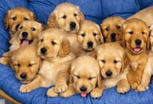 Puppies  / by Ally Howell