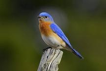 Blue Garden / I love blue!  Especially blue birds, blue flowers and blue glass.