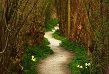 JARDÍN - Caminos - Garden Paths