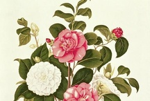 Botanical Art / by franceseattle