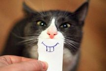 Funny Cat Pictures For Katie / And dogs, well cute stuff really!  / by Jane Burns