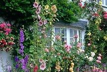 Gardens & Flowers II / My profile at OakmossLover has additional boards of interest to those who love gardens. There you will find separate boards for Roses, Lupines, Wisteria, Magnolia, Container Gardens, Floral Arrangements, etc. This profile is somewhat maxed out at 300+ boards!!