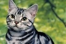 Cats / For dogs, visit Dog Breeds on my other Pinterest profile: Oakmosslover, or check out the Aw How Cute boards here, which contain many dog and cat photos.