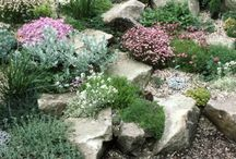 JARDÍN - Rocallas / Rock Garden