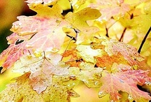 | autumn splendor | / by Cheryl Haseman