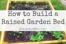 Gardening / #Frugal and easy gardening tips and ideas. / by A Proverbs Wife