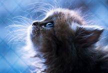 Magic through a lens / by Meelashini Auaduer