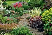 Gardens / by Cheryl Davis