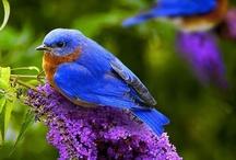 Blue Birds / by Cheryl Davis