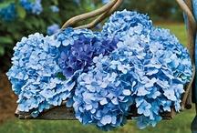 Beautiful Blues  / by Cheryl Davis