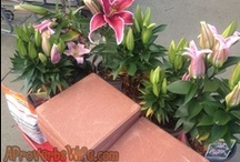 Curb Appeal / by A Proverbs Wife
