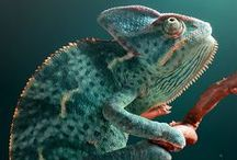 References: Reptiles & Amphibians / References: Reptiles & Amphibians is a geekinthecloset.com Pinterest board that contains useful images of real world reptiles and amphibians for artists and entertainment designers to use as a reference.