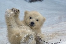 Adorable / Children and Animals, always put a smile on my face and fill my heart with Joy!  Love, nurture, teach and protect all of them wherever they are on this sometimes dangerous planet! / by Suzanne