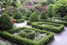 Jardin des Plantes / by Suzanne