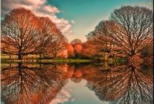 Trees / by Suzanne