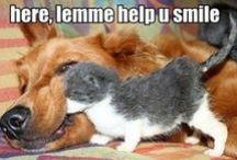 Animals. How cute!