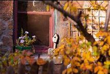AUTUMN / Fall Decor, Fall ideas, Fall colors... / by Zilá Longenecker