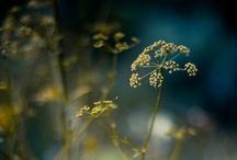 Inspiring Images / Photography / by Zilá Longenecker
