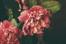 Flora / by Zilá Longenecker