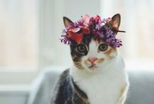 Gataria / All sorts of cute cats. #cats / by Zilá Longenecker