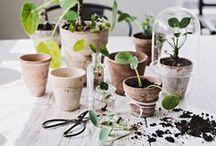 Gardening, Garden Ideas & Inspiration, Landscaping and Garden Sheds / Tools, Accessories, decoration, tutorials and inspiration for gardening and gardens. / by Zilá Longenecker