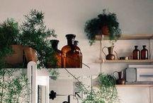 Indoor Garden, Succulents + Terrariums / #gardening Accessories for my miniature garden and ideas for terrariums. / by Zilá Longenecker