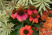 Container Gardens for Fall & Winter / Brighten the chilly months with lots of color