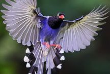 Bird / Aneka burung
