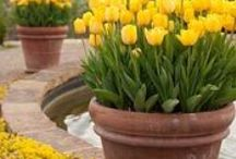 Flowers & Outdoor Ideas / by Crystal Murrow