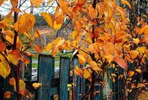 fall // autumn / #autumn #fall #herbst