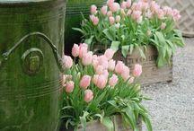 HOME- GARDENING / Bringing my garden to life