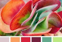 Color Palettes / by Regina K!