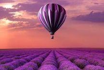 Lavanda, lila, violeta... / Purple...