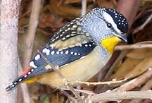 birds, yo / by Sarah セーラ / Nomad's Land