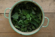 Nettles / by Wildcraft Vita