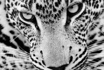 Animals / by Ana Maria Neher