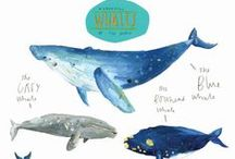 illustrations : animals and whimsy  / by Sarah セーラ / Nomad's Land