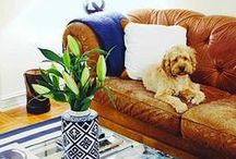 Great Room / Living Room Inspiration