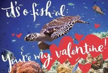 Green Love! / Valentine's Day gift ideas for the nature lover.  NRDCGreenGifts.org/valentines-collection / by NRDC