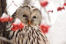 Whooooooo are youuuuuuuuuuu? / owls.  owls.  and more owls. / by Kathleen Harrison