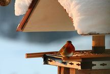 Bird-Feeding Month / February is National Wild Bird-Feeding Month!! Check out our great bird-feeder ideas. Enjoy! / by NRDC