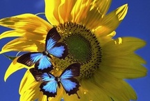 <> Blue and Yellow <> / by Brenda Huntsinger