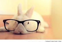 Bunnnnnn Love / All about #bunny lovin'. / by Kathleen Harrison