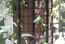 My New York Phytopod-3 Woody / Vertical garden containers for #verticalgardening of #herbs, #salad, #Tomatoes