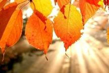 Colors of Fall / by NRDC