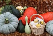 Fall Harvest / by NRDC