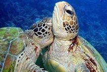 Deep Blue Sea / by NRDC BioGems