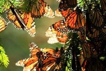 Butterflies / by NRDC