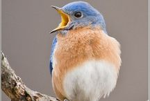 Happy Migratory Bird Day! 5/10/14 / by NRDC BioGems